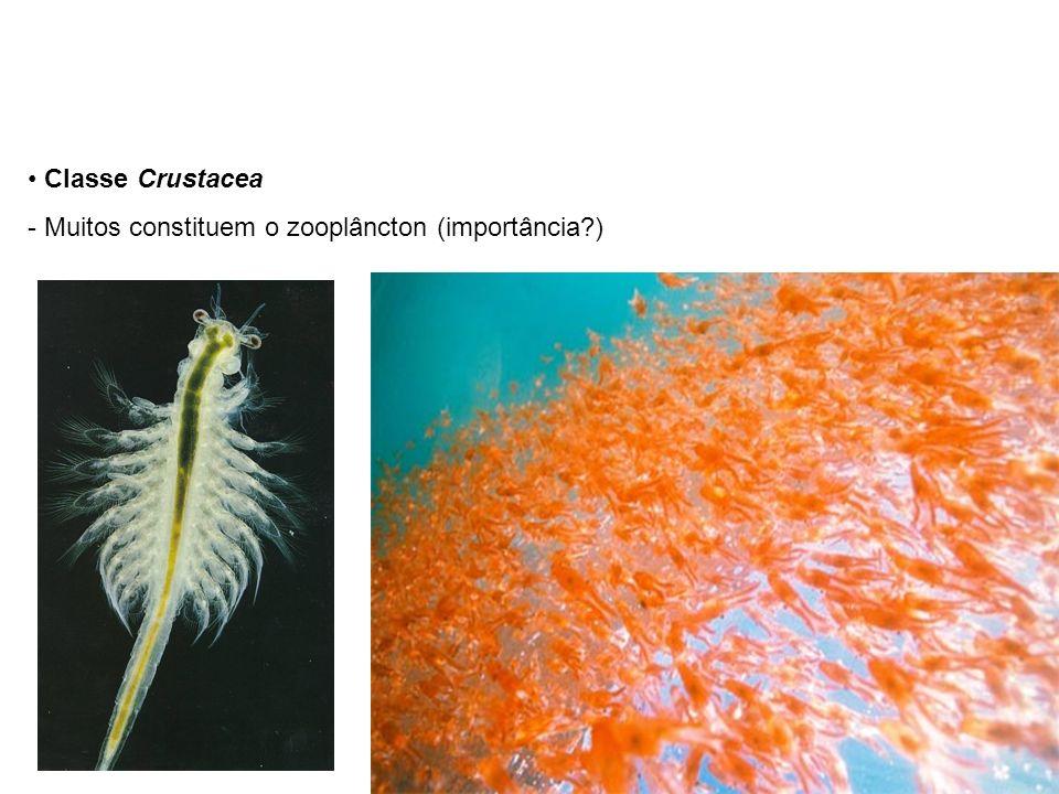 Classe Crustacea Muitos constituem o zooplâncton (importância )