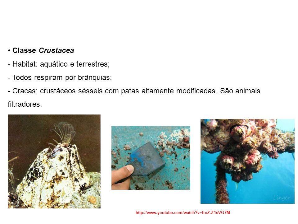 Habitat: aquático e terrestres; Todos respiram por brânquias;