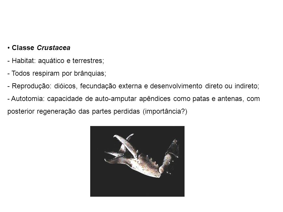 Classe Crustacea Habitat: aquático e terrestres; Todos respiram por brânquias;