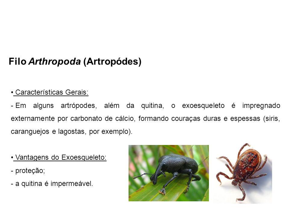 Filo Arthropoda (Artropódes)