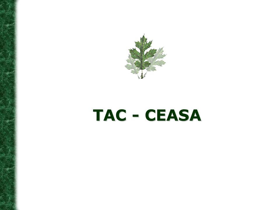 TAC - CEASA 19 19
