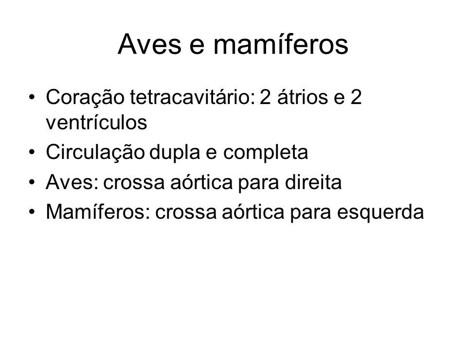 Aves e mamíferos Coração tetracavitário: 2 átrios e 2 ventrículos