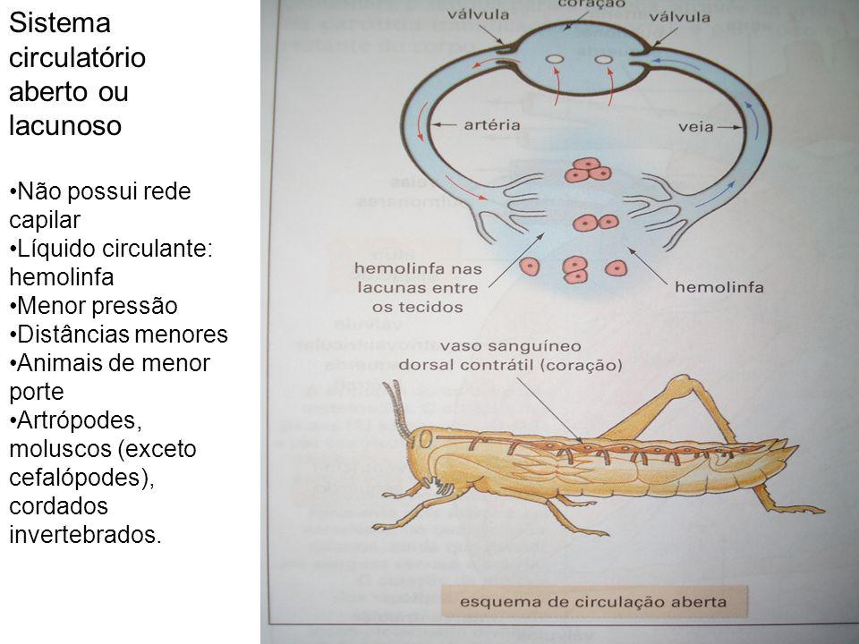 Sistema circulatório aberto ou lacunoso