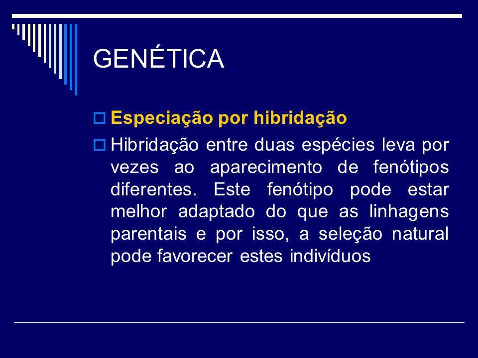 GENÉTICA Especiação por hibridação