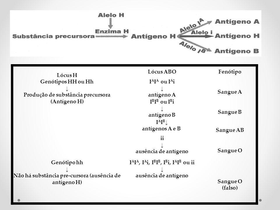 Genótipos HH ou Hh ↓ Produção de substância precursora (Antígeno H)