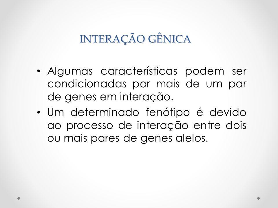 INTERAÇÃO GÊNICAAlgumas características podem ser condicionadas por mais de um par de genes em interação.