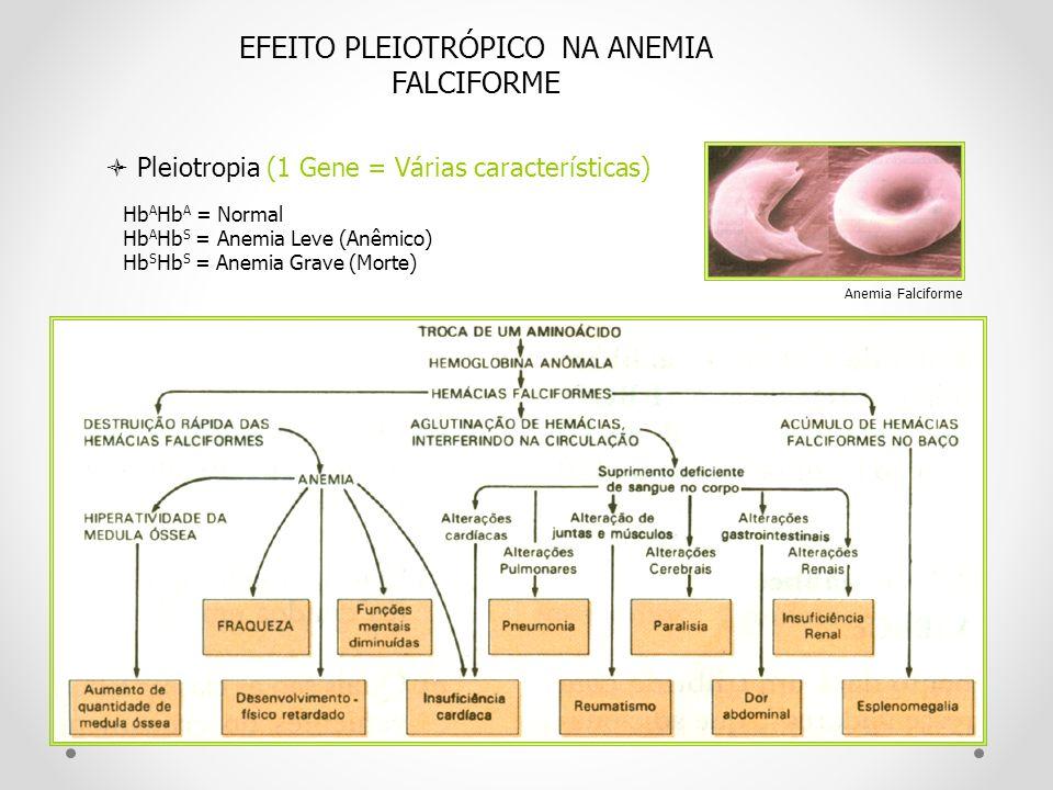EFEITO PLEIOTRÓPICO NA ANEMIA FALCIFORME