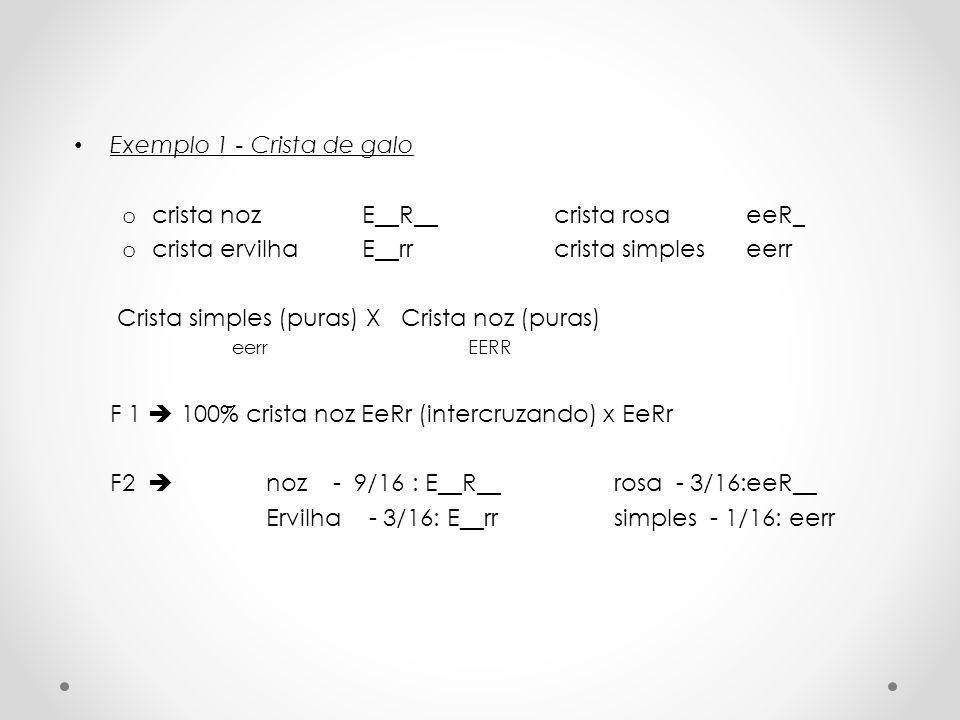 Exemplo 1 - Crista de galo crista noz E__R__ crista rosa eeR_