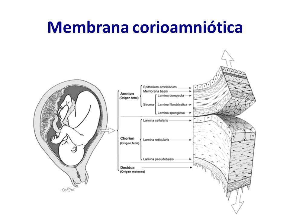 Membrana corioamniótica
