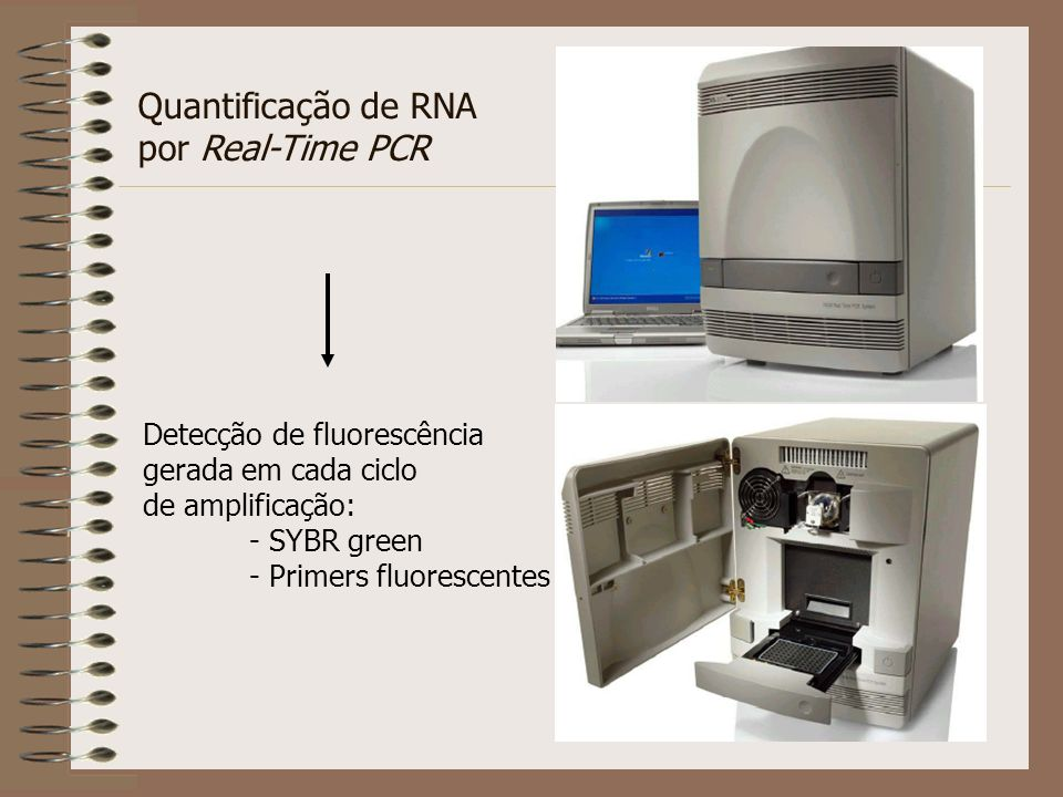 Quantificação de RNA por Real-Time PCR