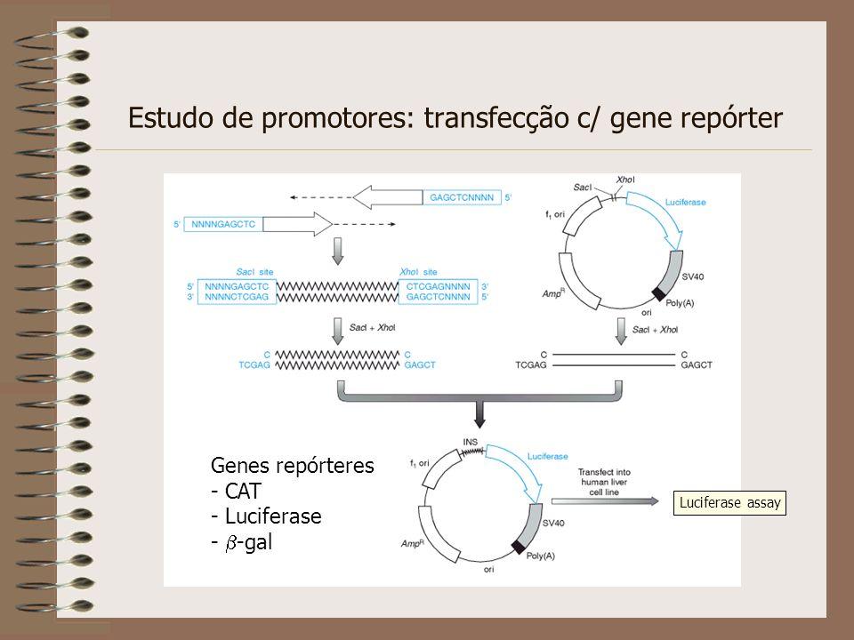 Estudo de promotores: transfecção c/ gene repórter