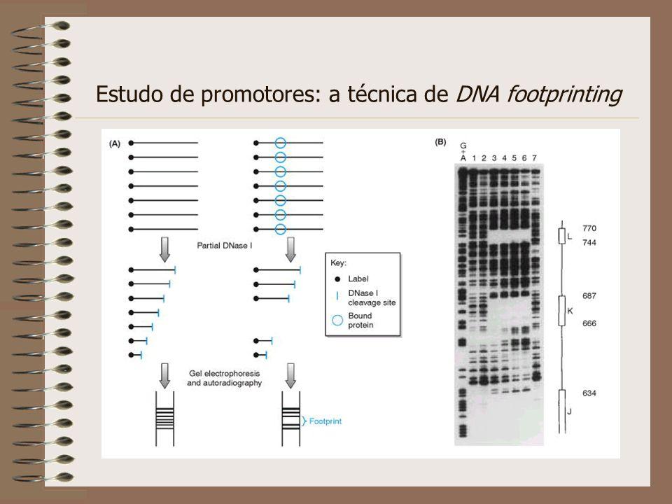 Estudo de promotores: a técnica de DNA footprinting