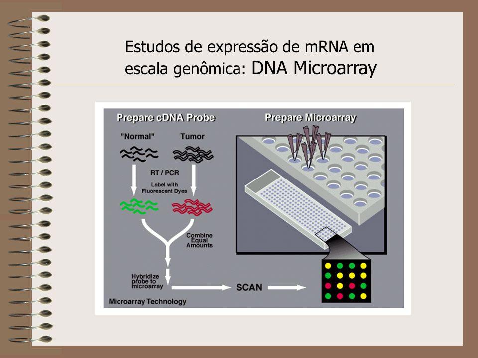 Estudos de expressão de mRNA em