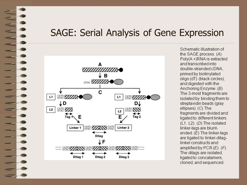 SAGE: Serial Analysis of Gene Expression
