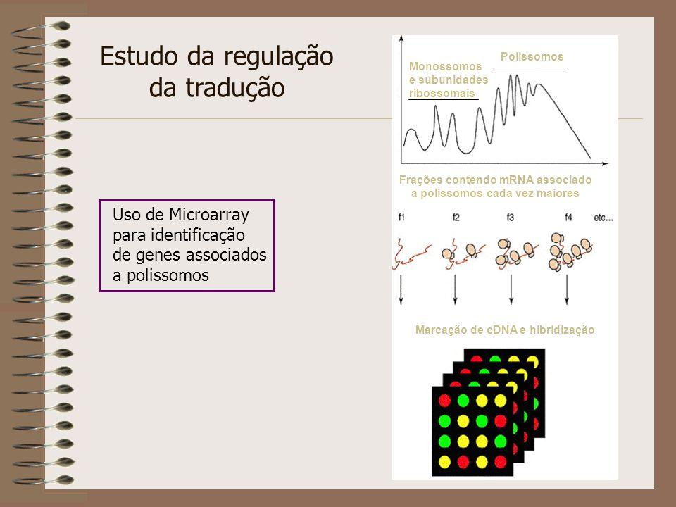 Estudo da regulação da tradução