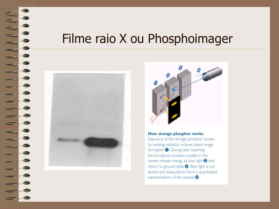 Filme raio X ou Phosphoimager