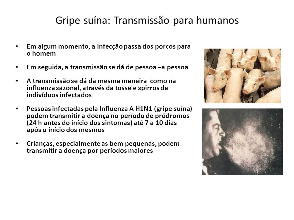 Gripe suína: Transmissão para humanos