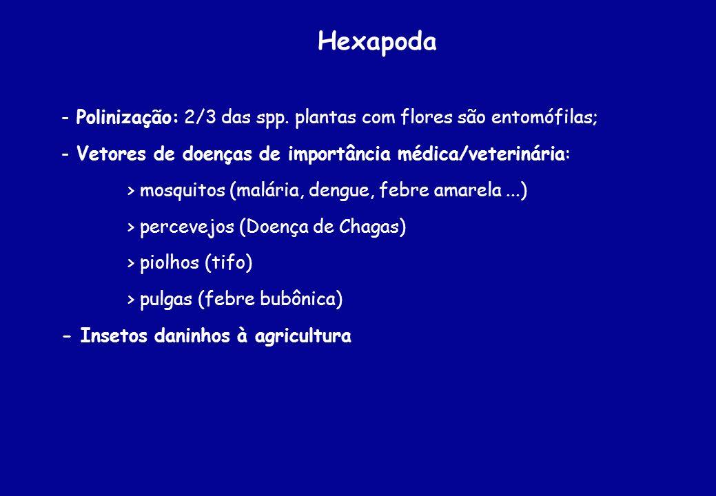 Hexapoda Polinização: 2/3 das spp. plantas com flores são entomófilas;