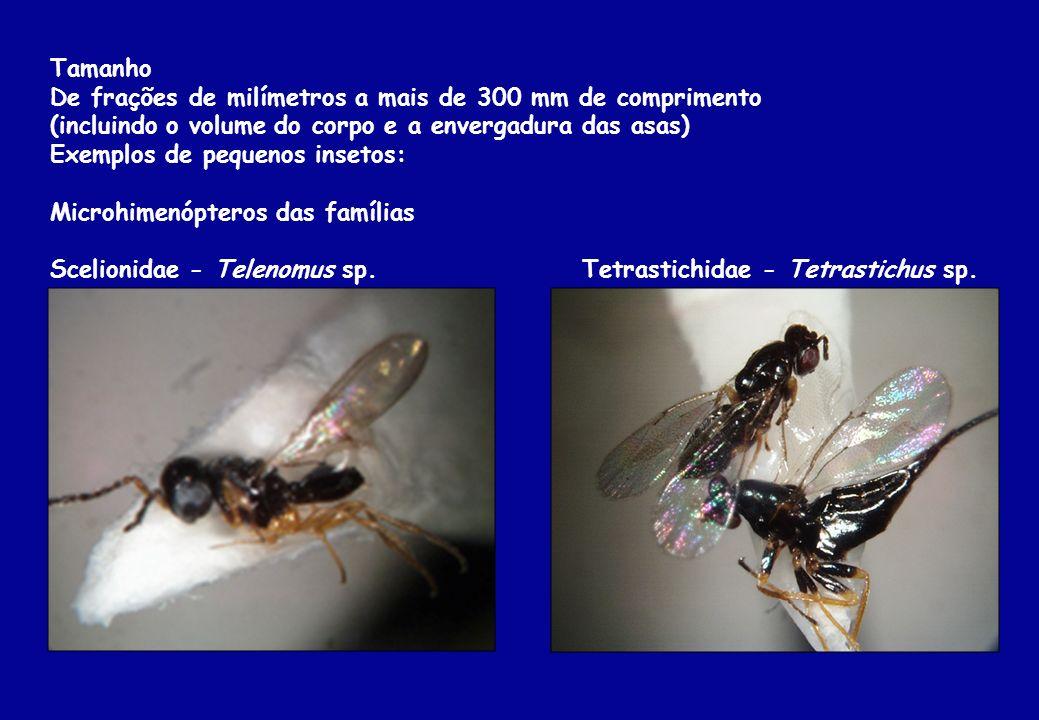 TamanhoDe frações de milímetros a mais de 300 mm de comprimento. (incluindo o volume do corpo e a envergadura das asas)