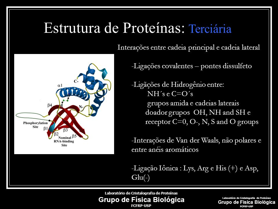 Estrutura de Proteínas: Terciária