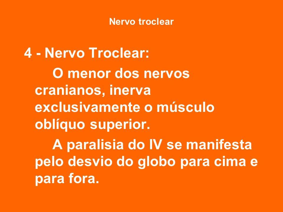 Nervo troclear 4 - Nervo Troclear: O menor dos nervos cranianos, inerva exclusivamente o músculo oblíquo superior.