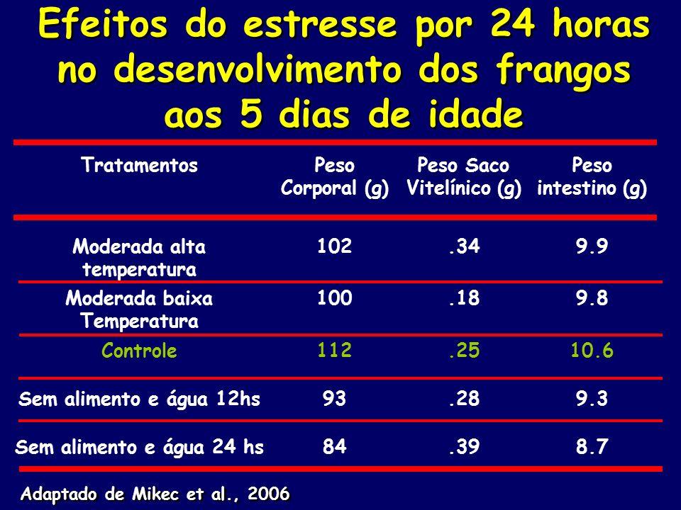 Efeitos do estresse por 24 horas no desenvolvimento dos frangos aos 5 dias de idade