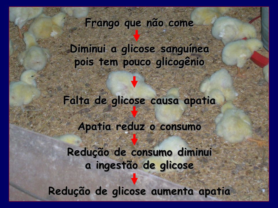 Diminui a glicose sanguínea pois tem pouco glicogênio