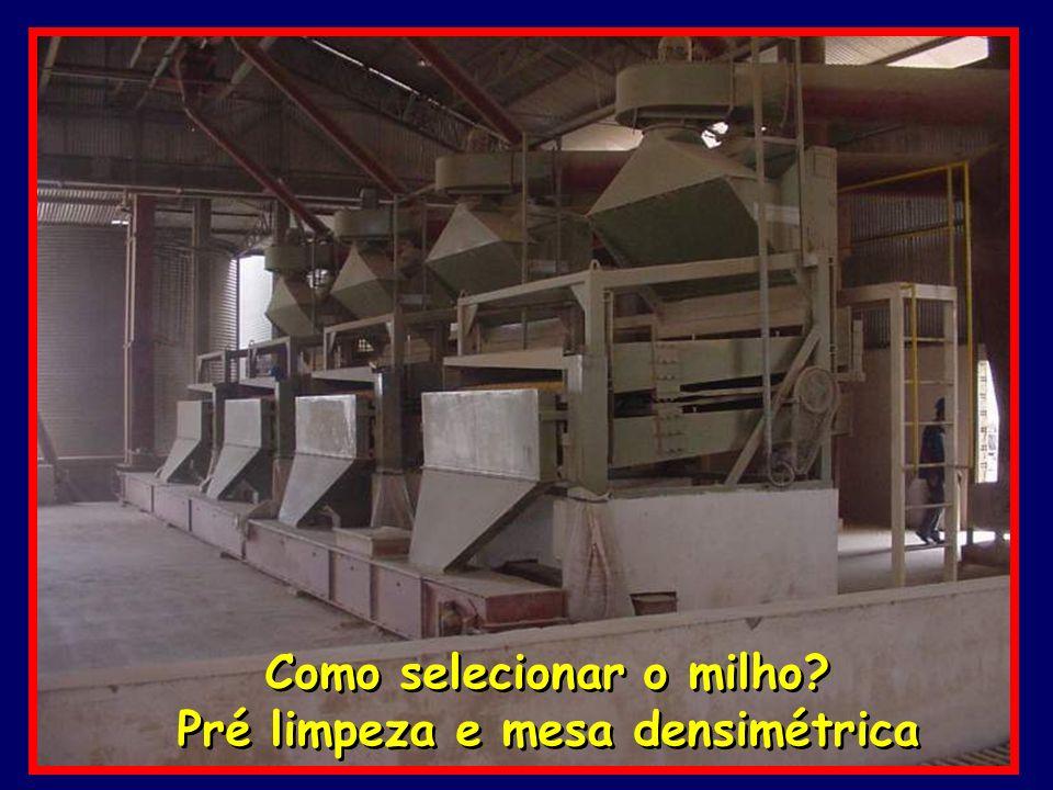 Como selecionar o milho Pré limpeza e mesa densimétrica