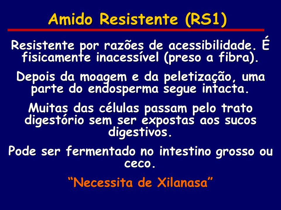 Amido Resistente (RS1) Resistente por razões de acessibilidade. É fisicamente inacessível (preso a fibra).