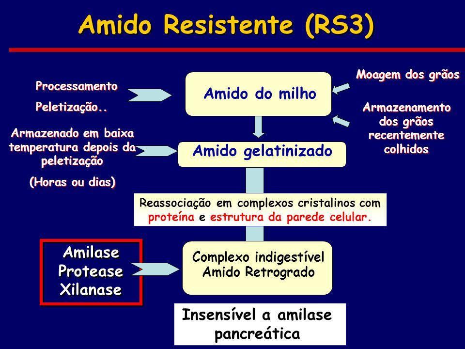 Amido Resistente (RS3) Amido gelatinizado Amilase Protease Xilanase