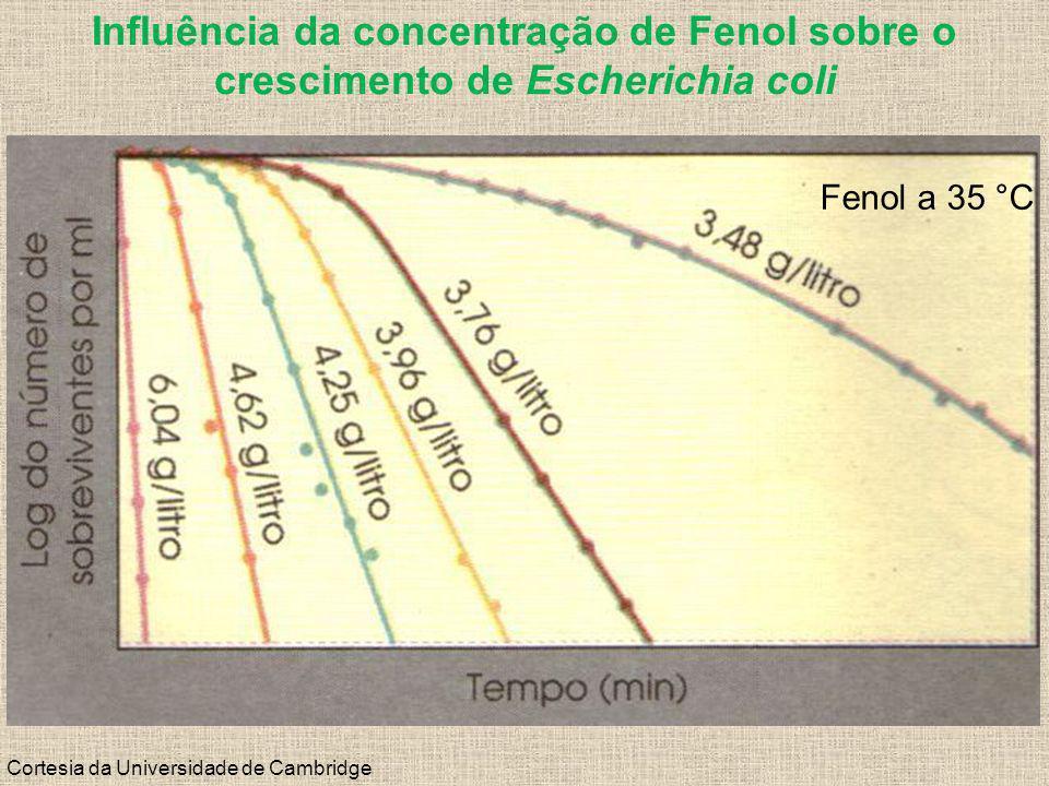 Influência da concentração de Fenol sobre o crescimento de Escherichia coli