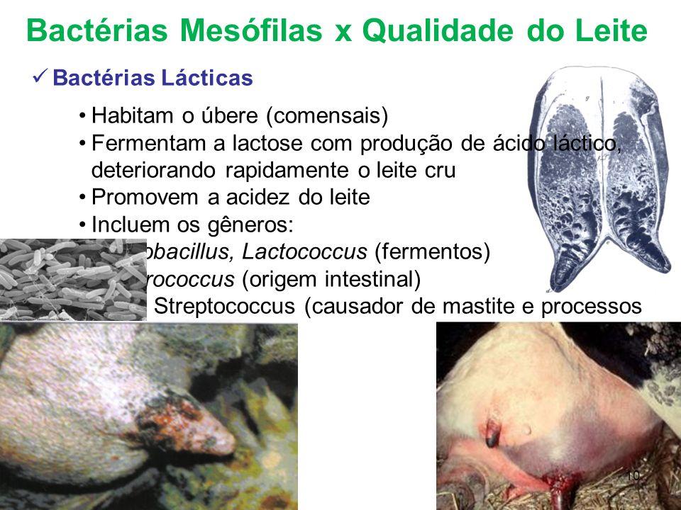 Bactérias Mesófilas x Qualidade do Leite