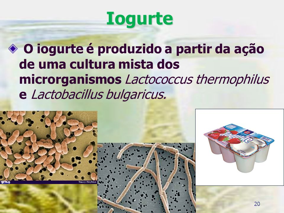 IogurteO iogurte é produzido a partir da ação de uma cultura mista dos microrganismos Lactococcus thermophilus e Lactobacillus bulgaricus.