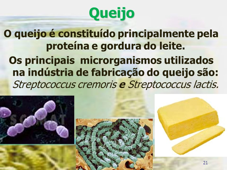Queijo O queijo é constituído principalmente pela proteína e gordura do leite.