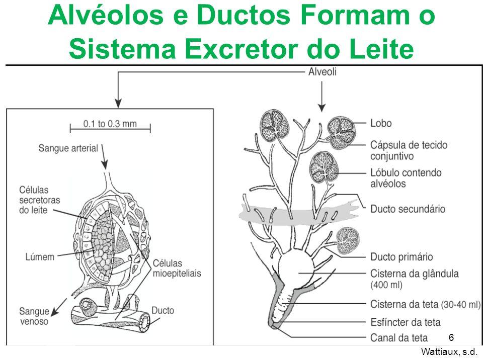 Alvéolos e Ductos Formam o Sistema Excretor do Leite