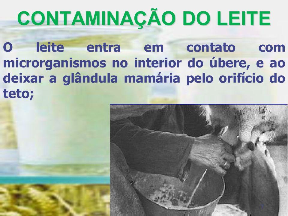 CONTAMINAÇÃO DO LEITEO leite entra em contato com microrganismos no interior do úbere, e ao deixar a glândula mamária pelo orifício do teto;
