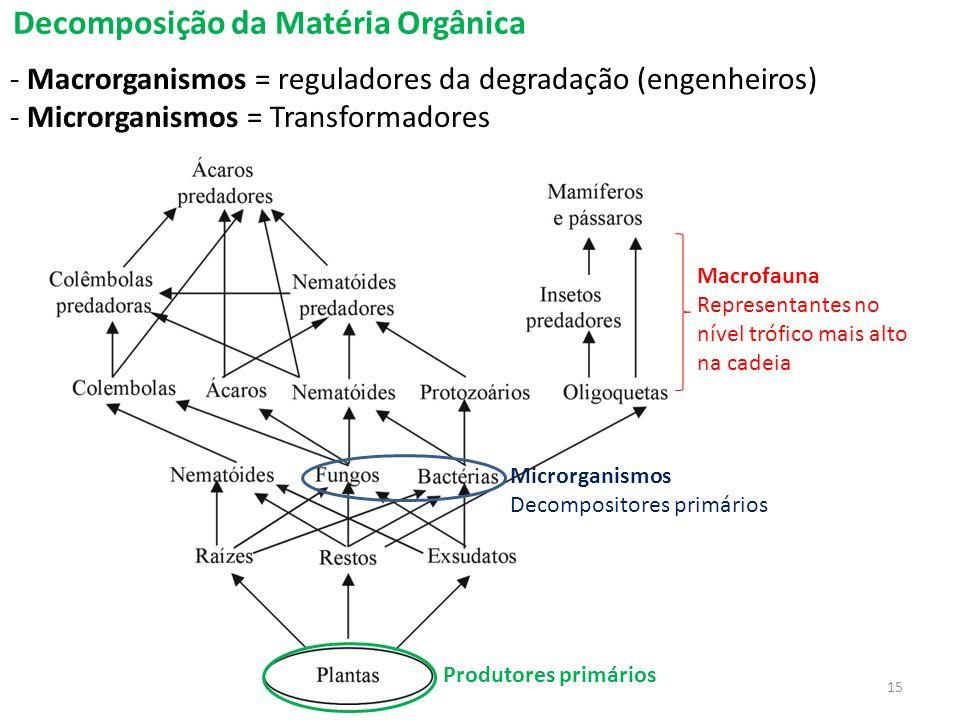 Decomposição da Matéria Orgânica