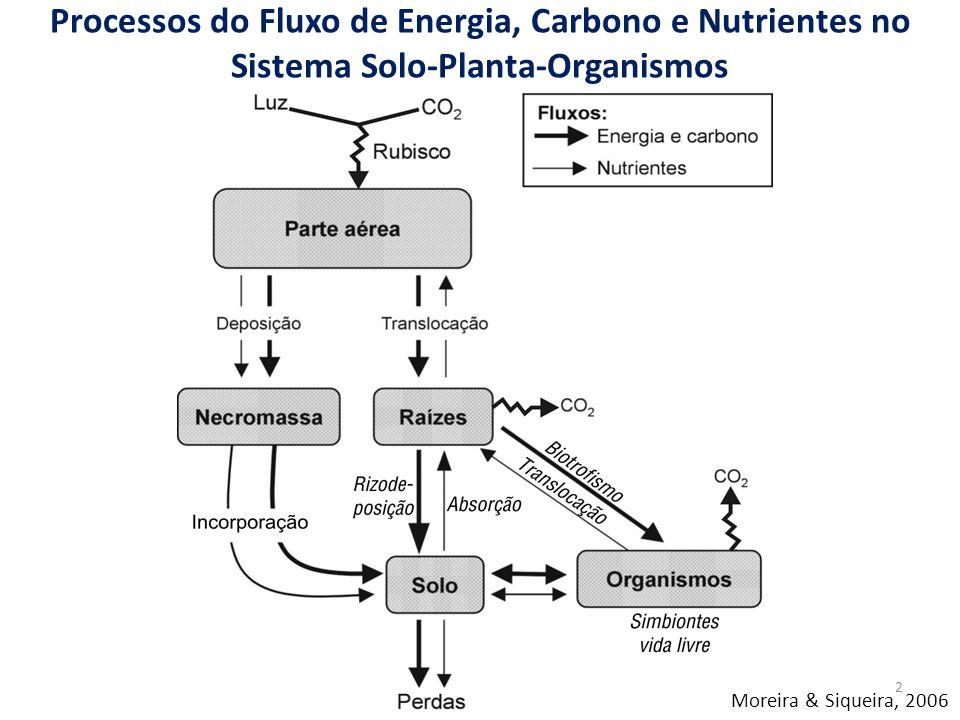 Processos do Fluxo de Energia, Carbono e Nutrientes no Sistema Solo-Planta-Organismos