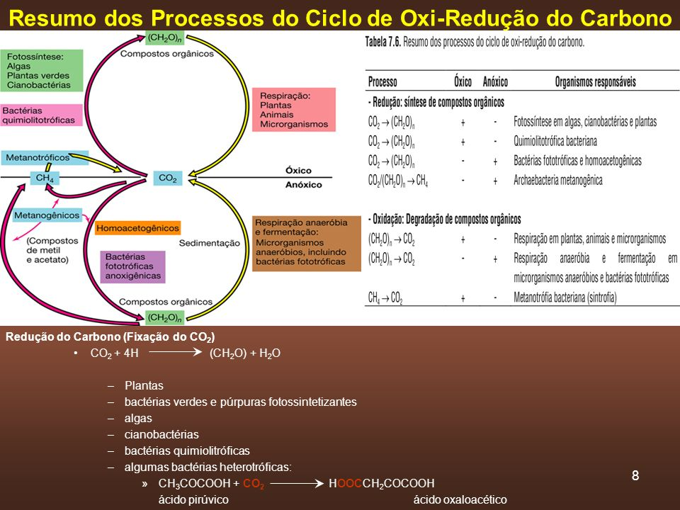 Resumo dos Processos do Ciclo de Oxi-Redução do Carbono