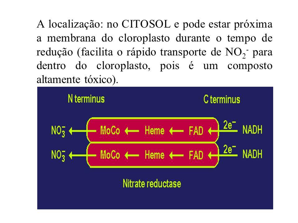 A localização: no CITOSOL e pode estar próxima a membrana do cloroplasto durante o tempo de redução (facilita o rápido transporte de NO2- para dentro do cloroplasto, pois é um composto altamente tóxico).