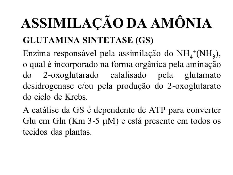 ASSIMILAÇÃO DA AMÔNIA GLUTAMINA SINTETASE (GS)