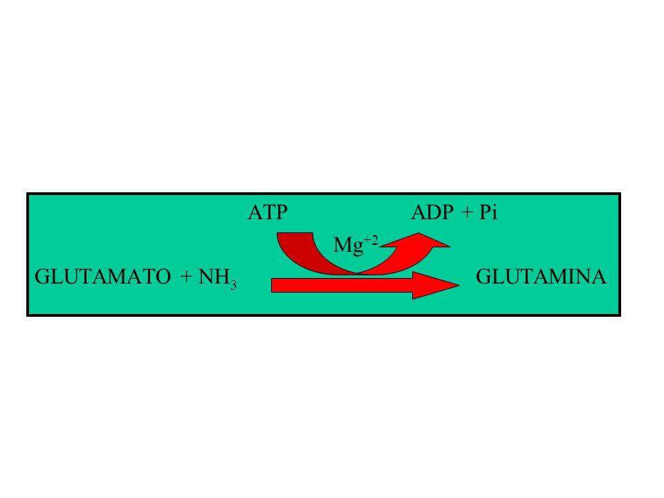 ATP ADP + Pi Mg+2.