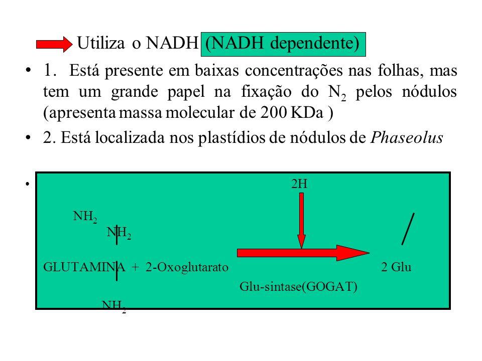 Utiliza o NADH (NADH dependente)