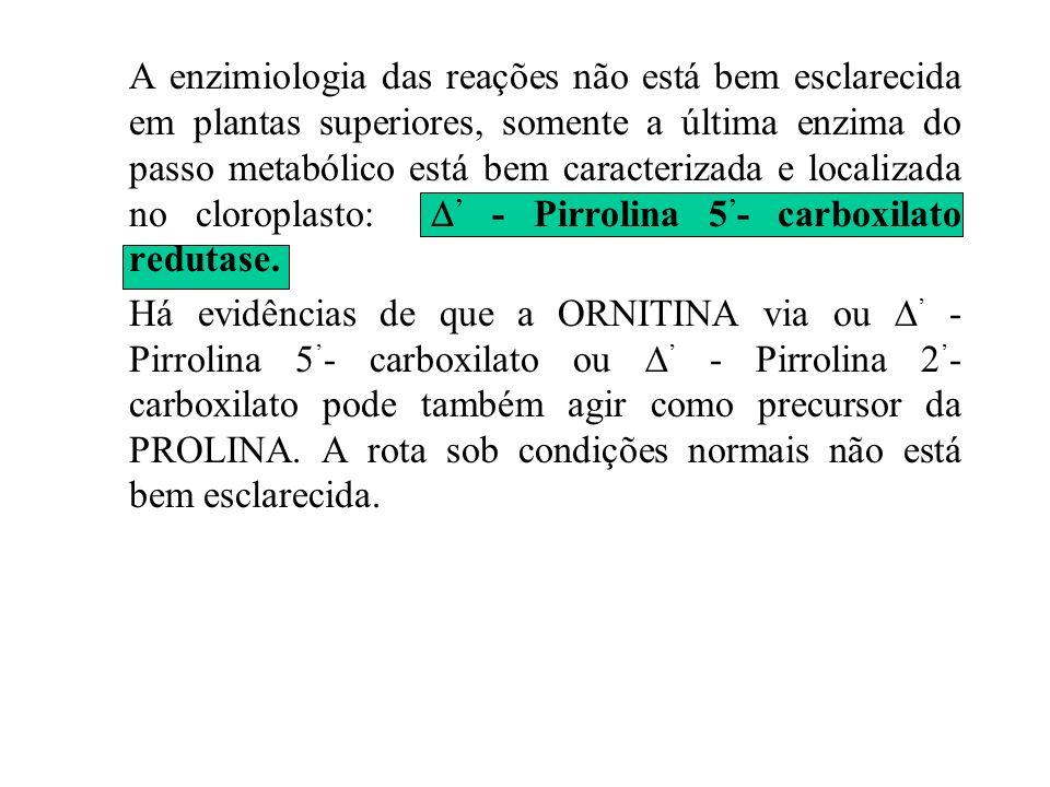 A enzimiologia das reações não está bem esclarecida em plantas superiores, somente a última enzima do passo metabólico está bem caracterizada e localizada no cloroplasto: ' - Pirrolina 5'- carboxilato redutase.