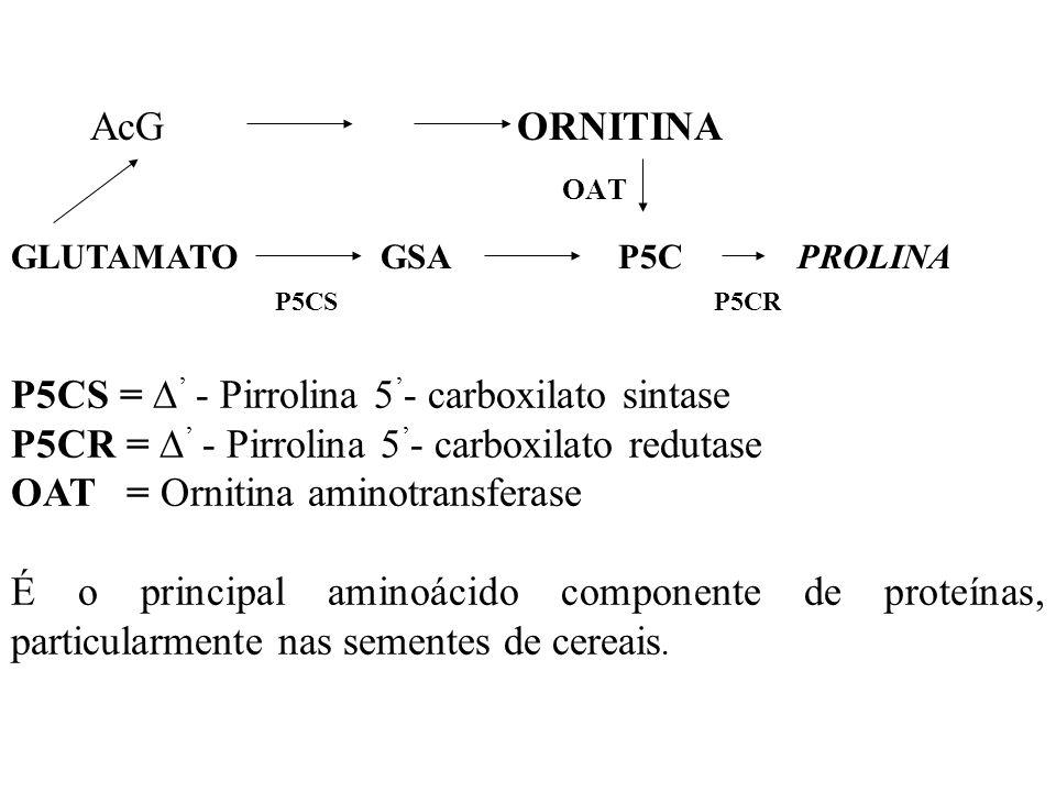P5CS = ' - Pirrolina 5'- carboxilato sintase