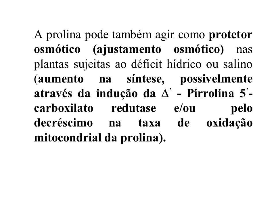A prolina pode também agir como protetor osmótico (ajustamento osmótico) nas plantas sujeitas ao déficit hídrico ou salino (aumento na síntese, possivelmente através da indução da ' - Pirrolina 5'- carboxilato redutase e/ou pelo decréscimo na taxa de oxidação mitocondrial da prolina).