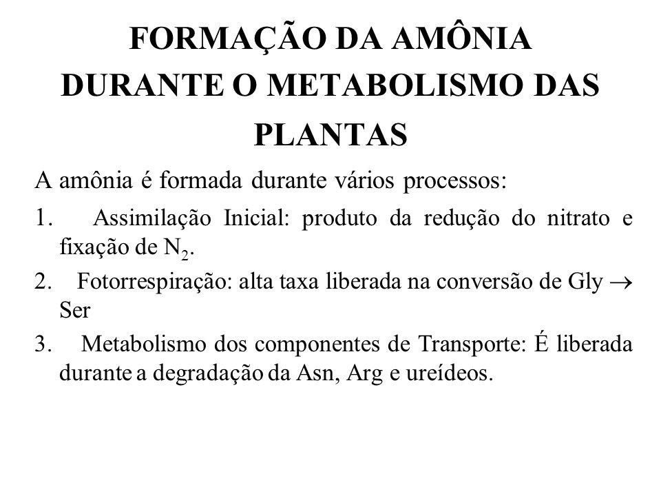 FORMAÇÃO DA AMÔNIA DURANTE O METABOLISMO DAS PLANTAS