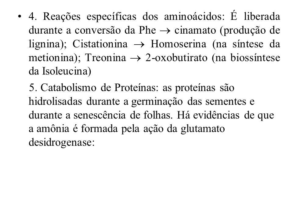 4. Reações específicas dos aminoácidos: É liberada durante a conversão da Phe  cinamato (produção de lignina); Cistationina  Homoserina (na síntese da metionina); Treonina  2-oxobutirato (na biossíntese da Isoleucina)