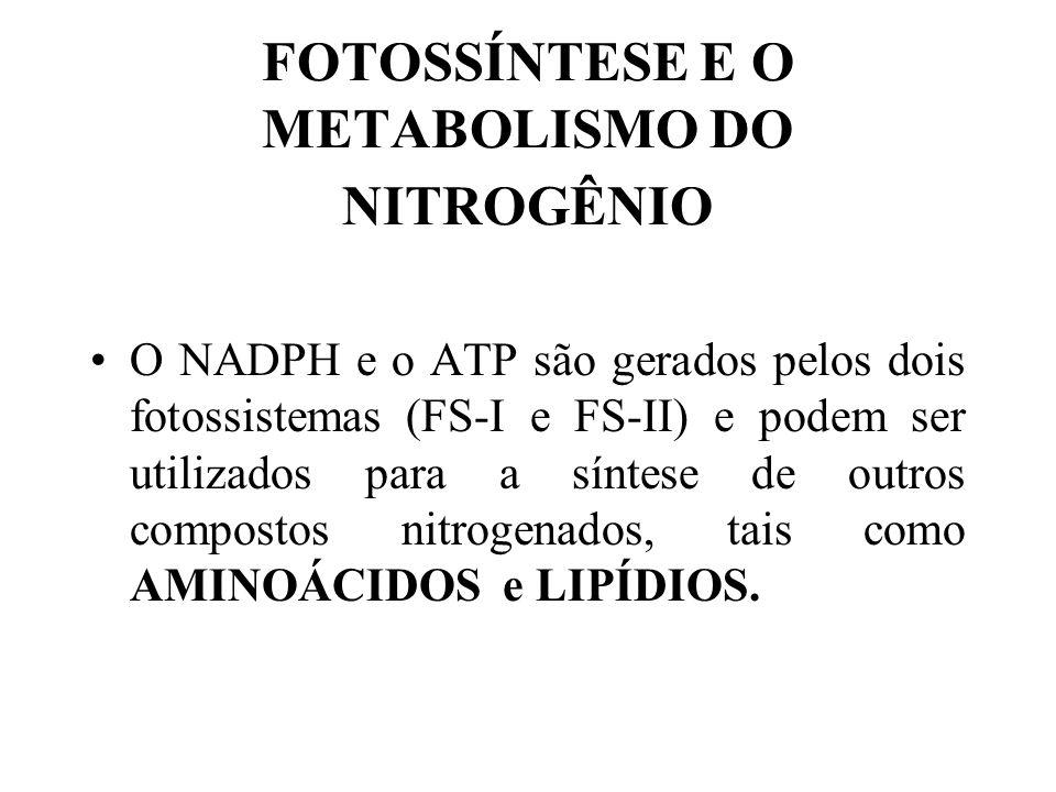 FOTOSSÍNTESE E O METABOLISMO DO NITROGÊNIO