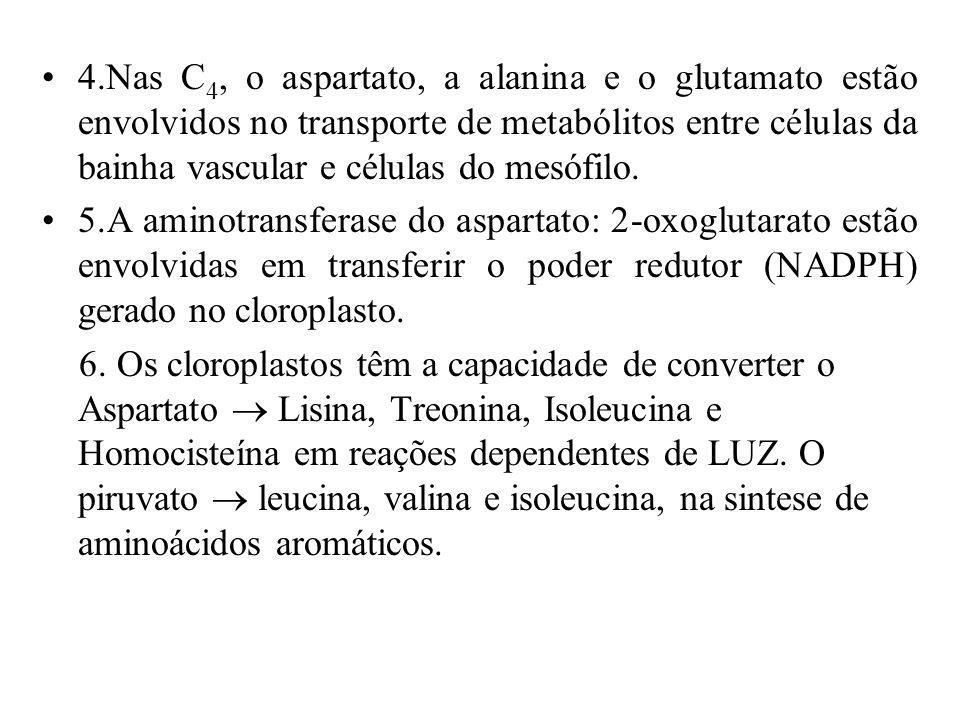4.Nas C4, o aspartato, a alanina e o glutamato estão envolvidos no transporte de metabólitos entre células da bainha vascular e células do mesófilo.